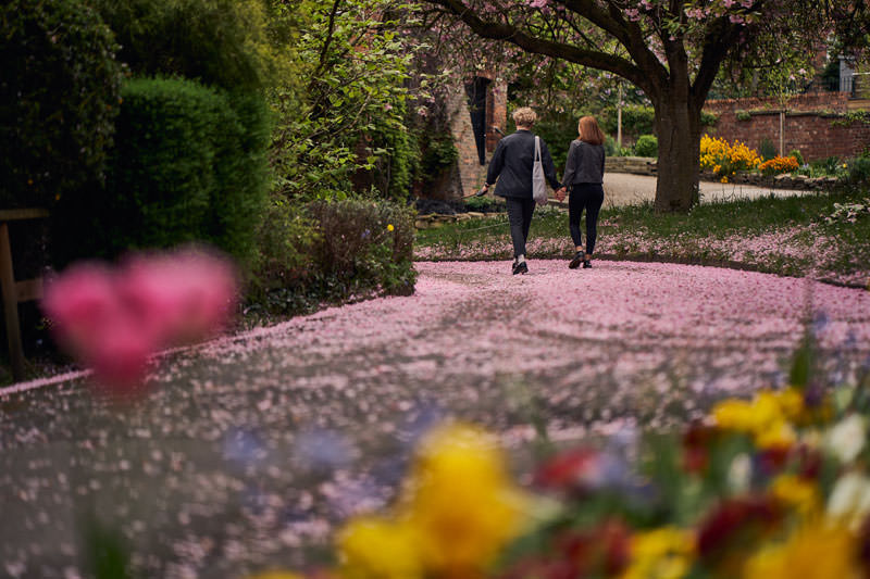 couple walking through the Fletcher Moss Botanical Gardens surrounded by fallen blossom